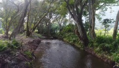 Waipio Valley Beach River Jungle